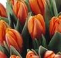 Buchet lalele portocalii