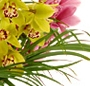 Orhidee cymbidium mix