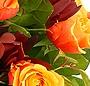 Trandafiri aprinsi