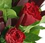 Trandafiri eleganti