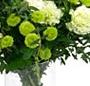 Alb si verde