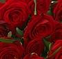 Buchet trandafiri