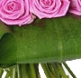 Cupidon in roz