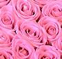 Inima trandafiri roz